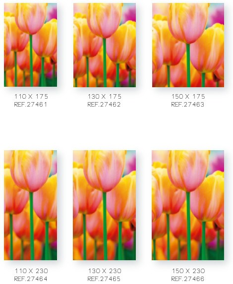 COLORFUL TULIPS (1)